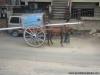 Até o cavalo é menor na Índia