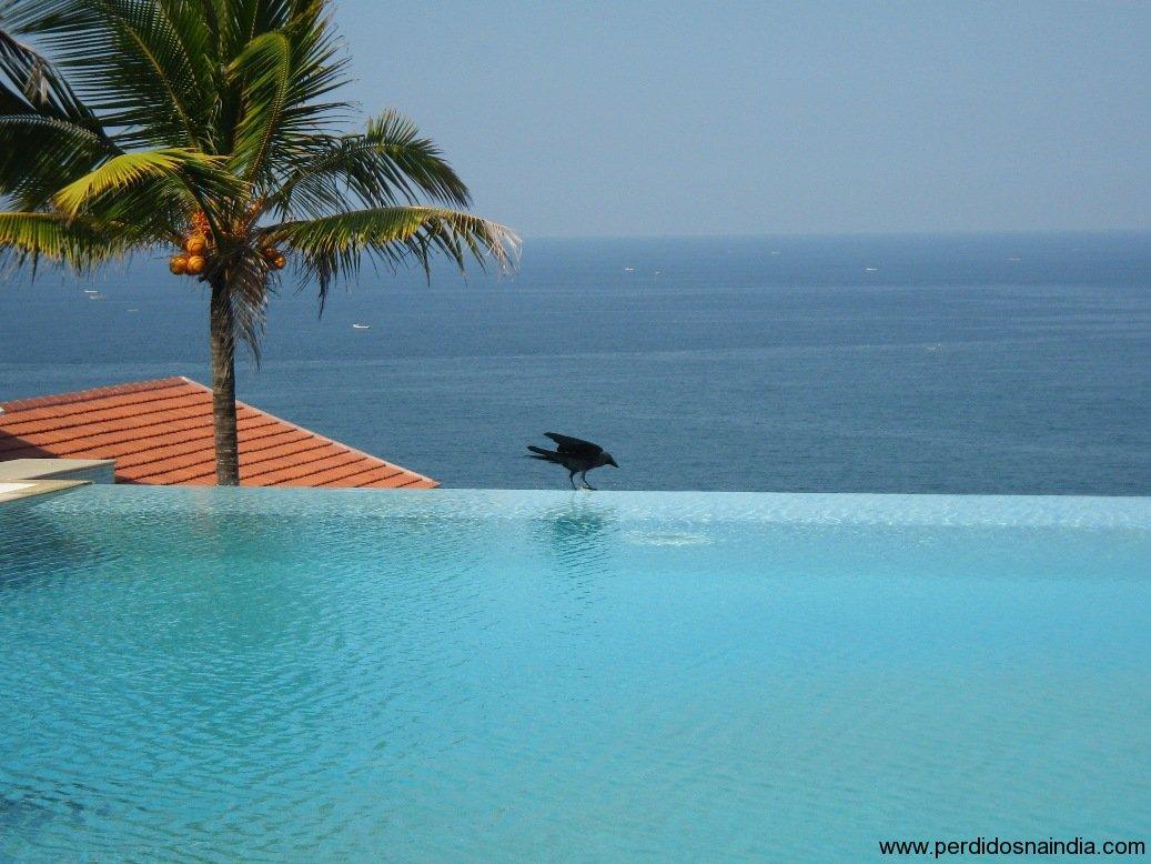 Meu amigo... o corvo...