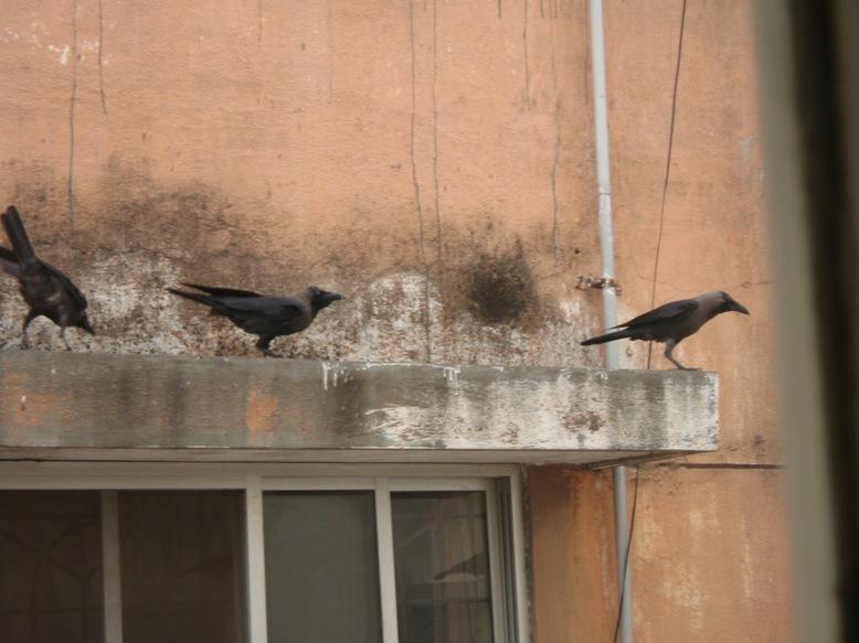 Olha o corvo!